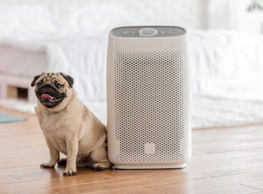 Best Air Purifiers for Pet odor, dander and Allergies